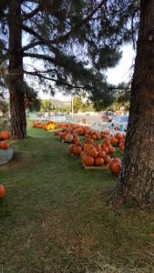 PumpkinPatch2015 2